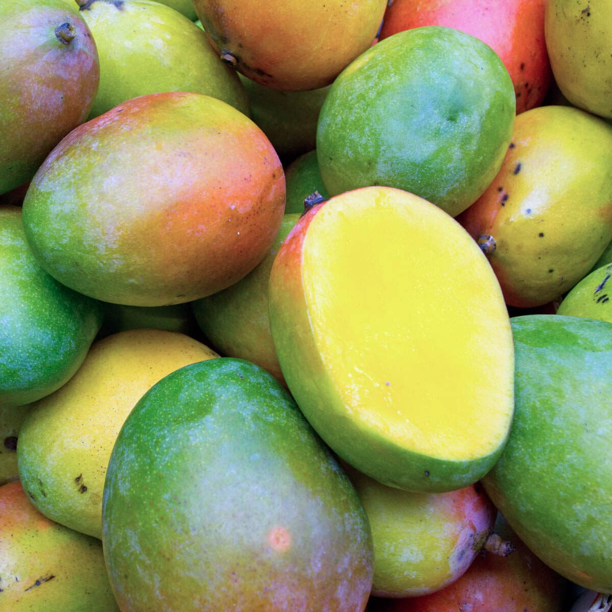 Group of mangos all together with one cut open in the front