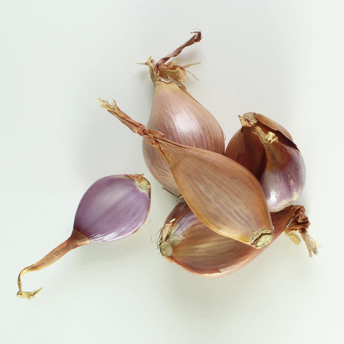 group of shallots